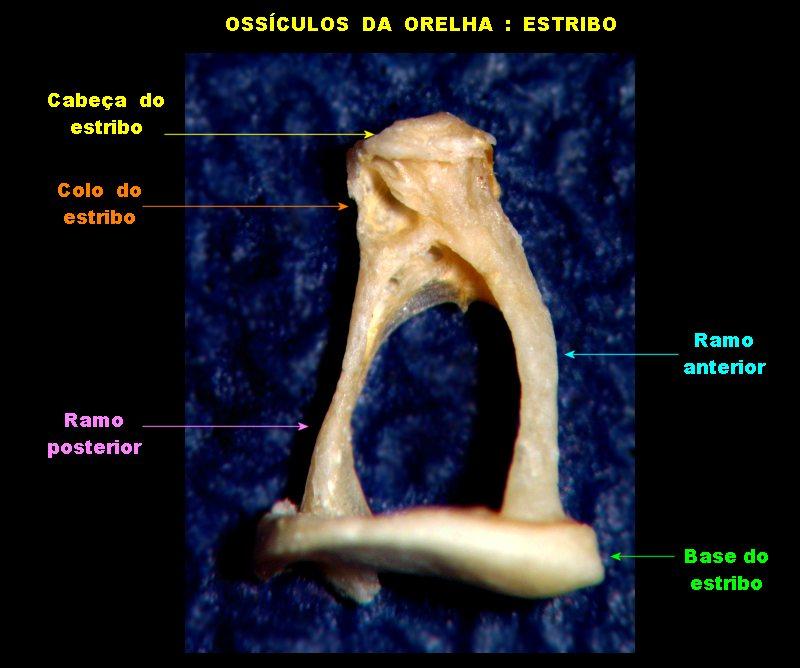 Orelha13++.jpg
